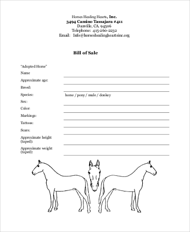 Horse Bill Of Sale Samples   Free Documents In Word Pdf