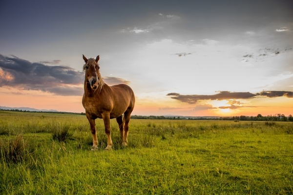 Free 3 Horse Lease Agreement Forms Pdf